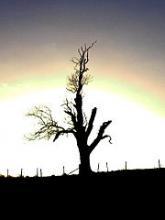 Arbre mort dans la lumière du lever du jour - Photo Andy Beecroft